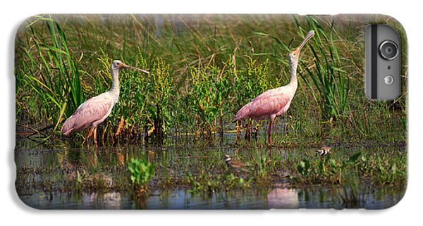 Roseate Spoonbills IPhone 6 Plus Case by Louise Heusinkveld
