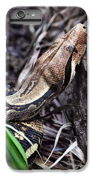 The Boa IPhone 6 Plus Case by JC Findley