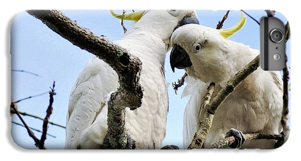 White Cockatoos IPhone 6 Plus Case by Kaye Menner