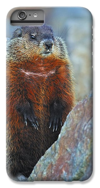 Woodchuck IPhone 6 Plus Case by Tony Beck