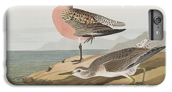 Red-breasted Sandpiper  IPhone 6 Plus Case by John James Audubon