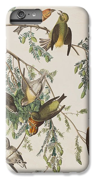 American Crossbill IPhone 6 Plus Case by John James Audubon