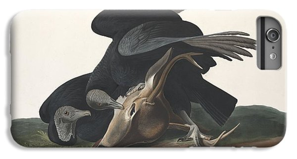Black Vulture IPhone 6 Plus Case by John James Audubon