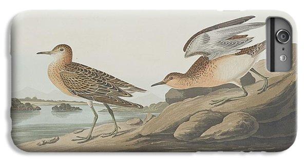 Buff-breasted Sandpiper IPhone 6 Plus Case by John James Audubon