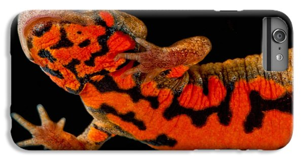 Chuxiong Fire Belly Newt IPhone 6 Plus Case by Dant� Fenolio