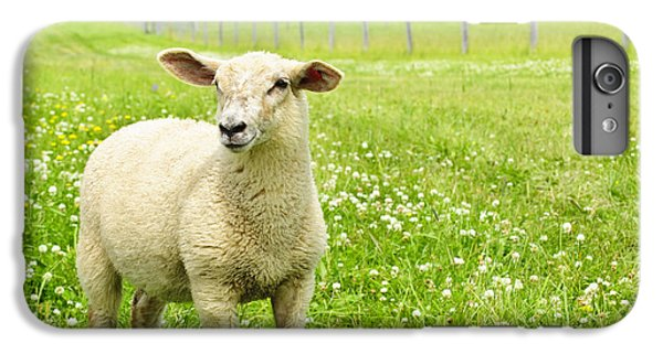 Cute Young Sheep IPhone 6 Plus Case by Elena Elisseeva