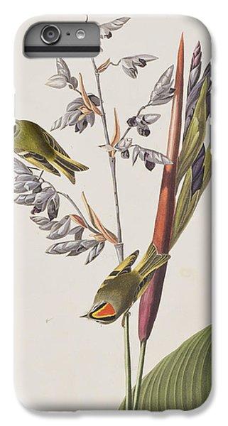 Golden-crested Wren IPhone 6 Plus Case by John James Audubon