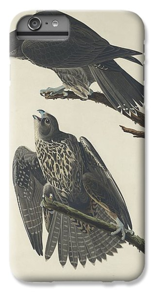 Labrador Falcon IPhone 6 Plus Case by John James Audubon