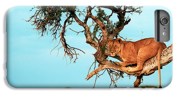 Lioness In Africa IPhone 6 Plus Case by Sebastian Musial