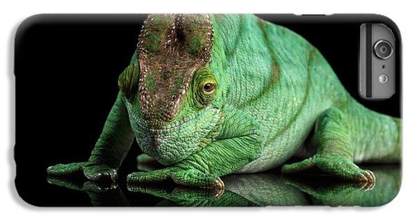 Parson Chameleon, Calumma Parsoni Orange Eye On Black IPhone 6 Plus Case by Sergey Taran