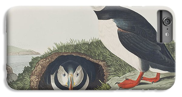 Puffin IPhone 6 Plus Case by John James Audubon