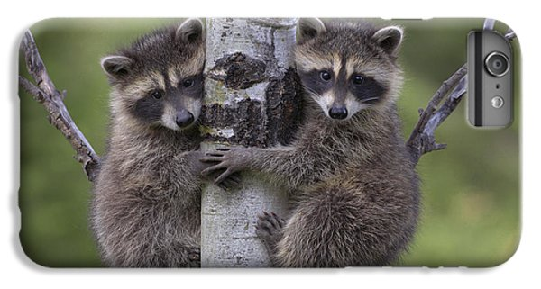 Raccoon Two Babies Climbing Tree North IPhone 6 Plus Case by Tim Fitzharris