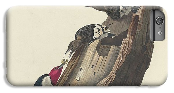 Red-headed Woodpecker IPhone 6 Plus Case by John James Audubon