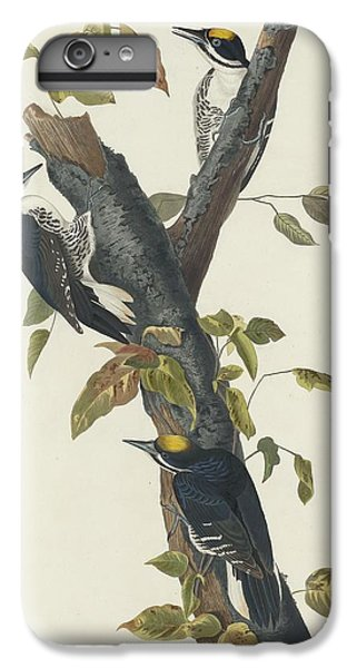 Three-toed Woodpecker IPhone 6 Plus Case by John James Audubon