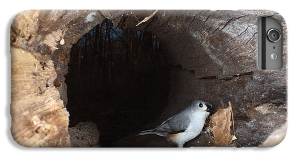 Tufted Titmouse In A Log IPhone 6 Plus Case by Ted Kinsman
