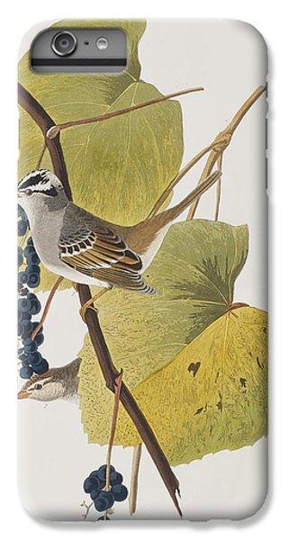 White-crowned Sparrow IPhone 6 Plus Case by John James Audubon