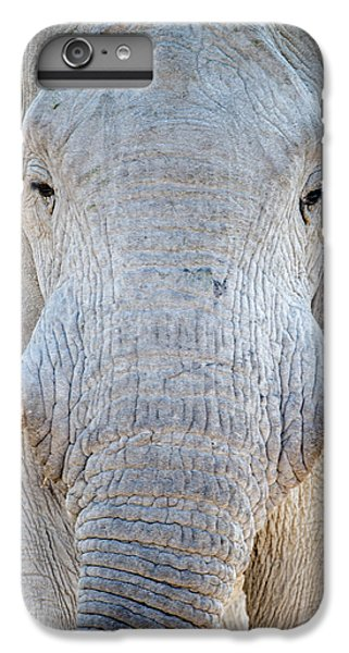 African Elephant Loxodonta Africana IPhone 6 Plus Case by Panoramic Images