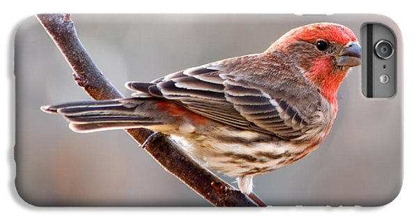 House Finch IPhone 6 Plus Case by Betty LaRue