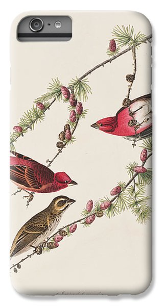 Purple Finch IPhone 6 Plus Case by John James Audubon