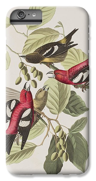 White-winged Crossbill IPhone 6 Plus Case by John James Audubon
