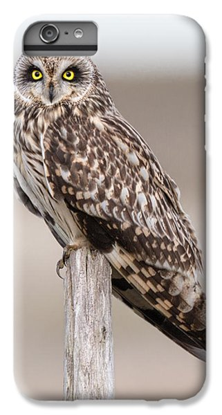 Short Eared Owl IPhone 6 Plus Case by Ian Hufton