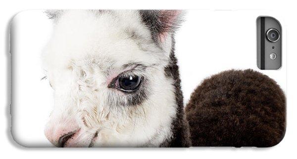 Adorable Baby Alpaca Cuteness IPhone 6 Plus Case by TC Morgan