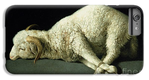 Agnus Dei IPhone 6 Plus Case by Francisco de Zurbaran