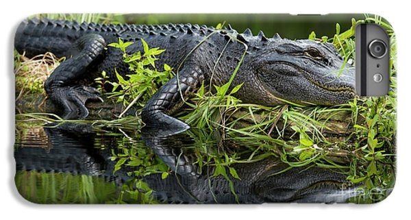 American Alligator In The Wild IPhone 6 Plus Case by Dustin K Ryan