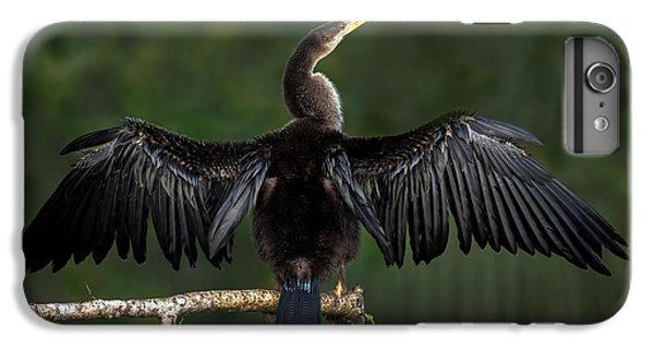 Anhinga Anhinga Anhinga Perching IPhone 6 Plus Case by Panoramic Images