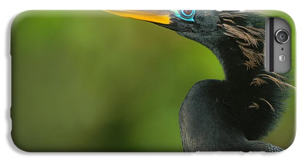 Anhinga Anhinga Anhinga, Tortuguero IPhone 6 Plus Case by Panoramic Images