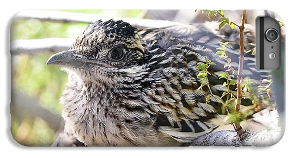 Baby Roadrunner  IPhone 6 Plus Case by Saija Lehtonen