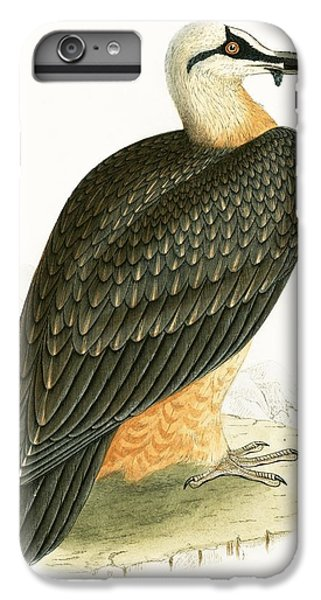 Bearded Vulture IPhone 6 Plus Case by English School