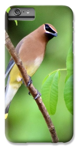 Beautiful Cedar Wax Wing  IPhone 6 Plus Case by Sheri McLeroy