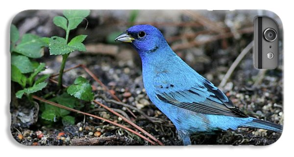 Beautiful Indigo Bunting IPhone 6 Plus Case by Sabrina L Ryan