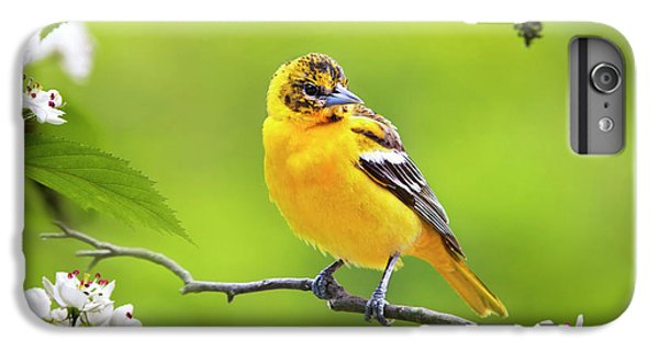 Bird And Blooms - Baltimore Oriole IPhone 6 Plus Case by Christina Rollo
