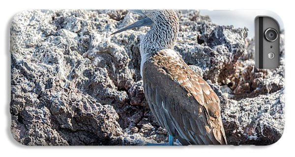 Blue Footed Booby IPhone 6 Plus Case by Jess Kraft