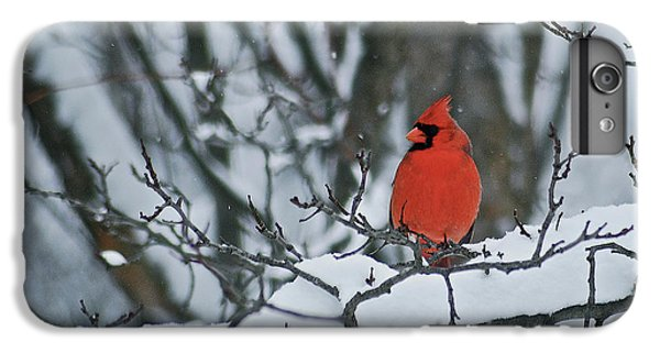 Cardinal And Snow IPhone 6 Plus Case by Michael Peychich