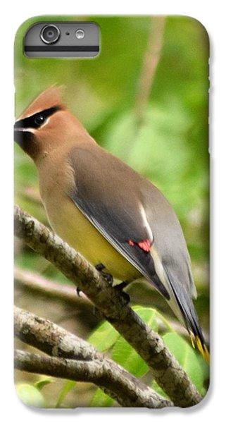 Cedar Wax Wing 1 IPhone 6 Plus Case by Sheri McLeroy