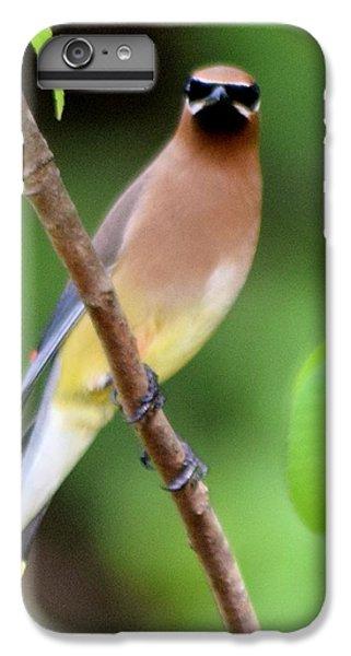 Cedar Wax Wing 2 IPhone 6 Plus Case by Sheri McLeroy