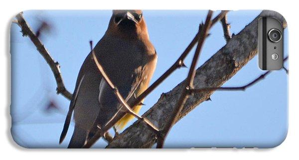 Cedar Wax Wing On The Lookout IPhone 6 Plus Case by Barbara Dalton
