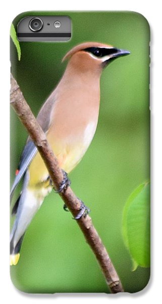 Cedar Wax Wing Profile IPhone 6 Plus Case by Sheri McLeroy