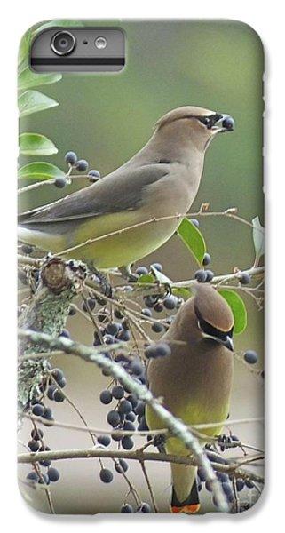 Cedar Wax Wings IPhone 6 Plus Case by Lizi Beard-Ward