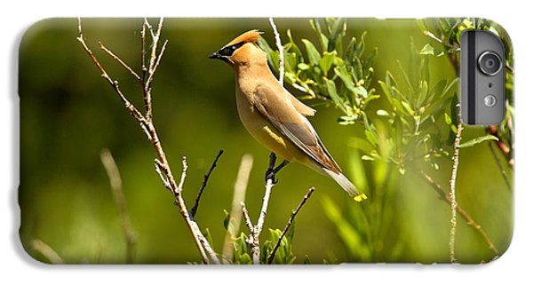 Cedar Waxwing At Glacier IPhone 6 Plus Case by Adam Jewell