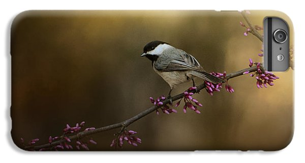 Chickadee In The Golden Light IPhone 6 Plus Case by Jai Johnson