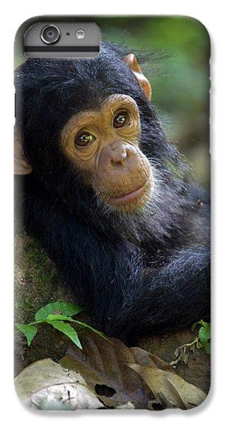 Chimpanzee Pan Troglodytes Baby Leaning IPhone 6 Plus Case by Ingo Arndt