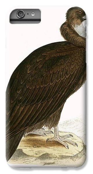 Cinereous Vulture IPhone 6 Plus Case by English School