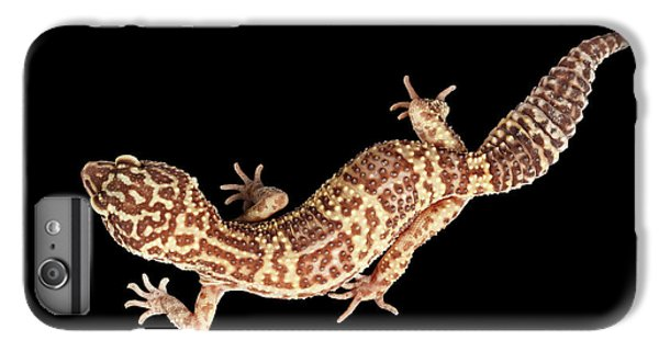 Closeup Leopard Gecko Eublepharis Macularius Isolated On Black Background IPhone 6 Plus Case by Sergey Taran