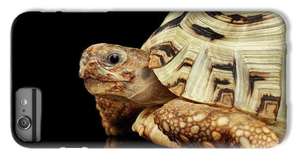 Closeup Leopard Tortoise Albino,stigmochelys Pardalis Turtle With White Shell On Isolated Black Back IPhone 6 Plus Case by Sergey Taran