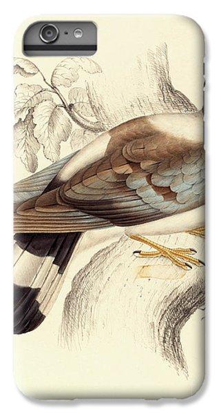 Columba Leuconota, Snow Pigeon IPhone 6 Plus Case by Elizabeth Gould