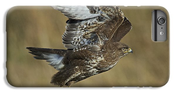 Common Buzzard IPhone 6 Plus Case by Michael Durham/FLPA